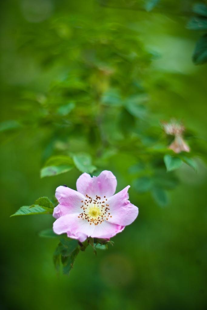 IMAGE: http://www.4photos.de/camera-diy/Edixa-85mm-lens-1024.jpg