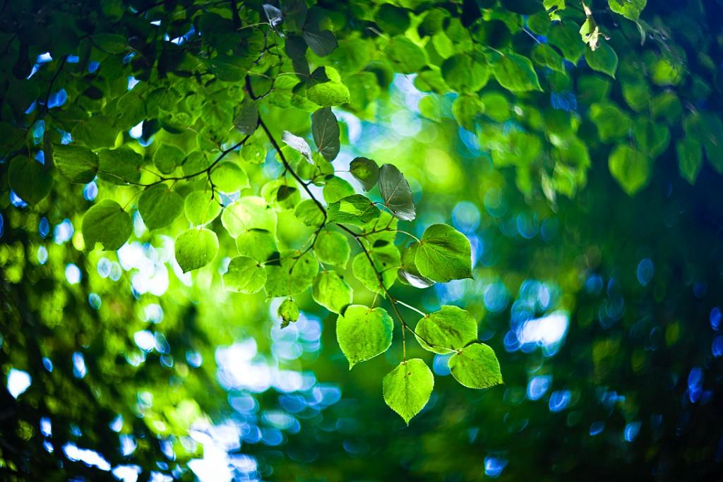 IMAGE: http://www.4photos.de/galerie/Natur/slides/Blaetter.jpg