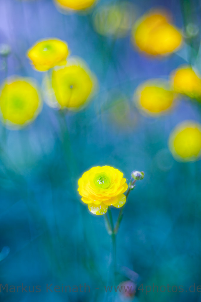 IMAGE: http://www.4photos.de/galerie/Natur/slides/Blau-Gelb-Komposition.jpg