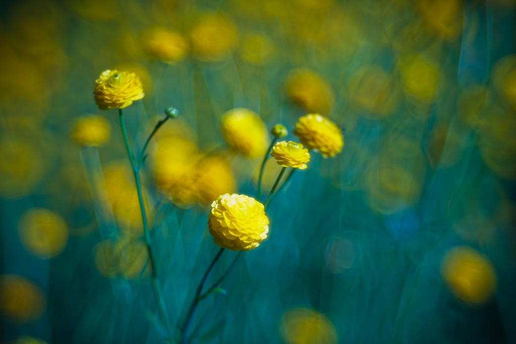 IMAGE: http://www.4photos.de/galerie/Natur/slides/Blumen-Kuehl.jpg