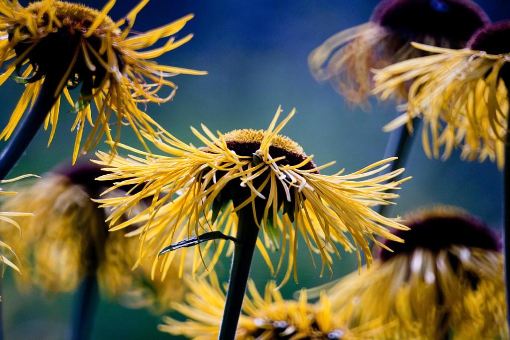 IMAGE: http://www.4photos.de/galerie/Natur/slides/Blumenfotografie-Spiegeltele.jpg