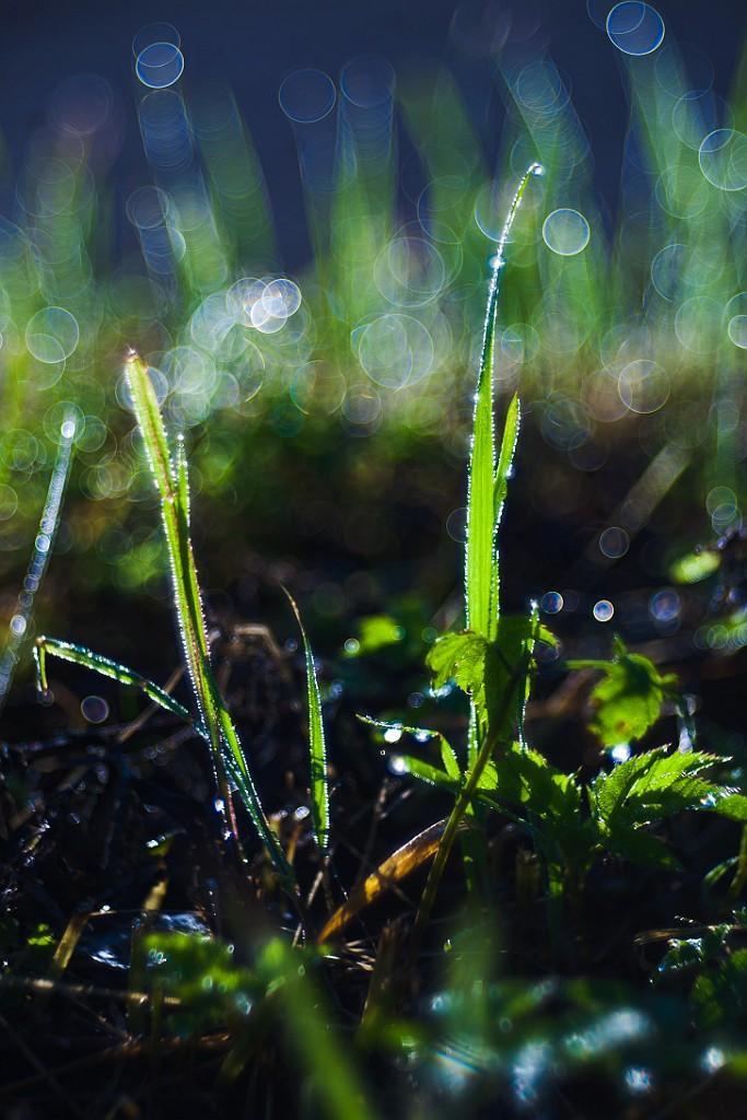 IMAGE: http://www.4photos.de/galerie/Natur/slides/Bubble-Bokeh.jpg