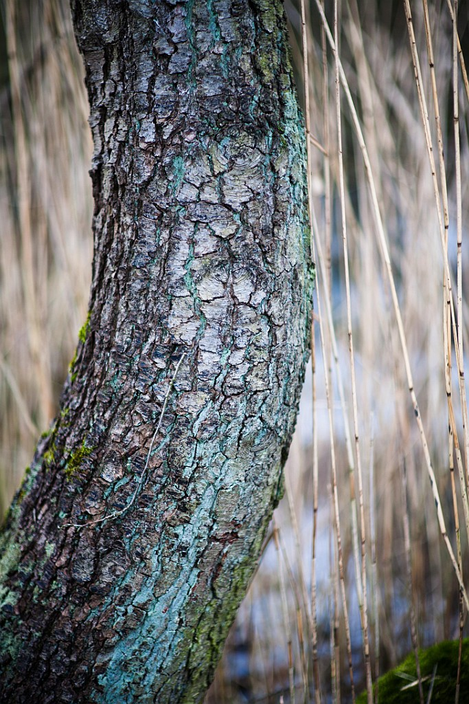 IMAGE: http://www.4photos.de/galerie/Natur/slides/Canon_FD_85_1.2L.jpg