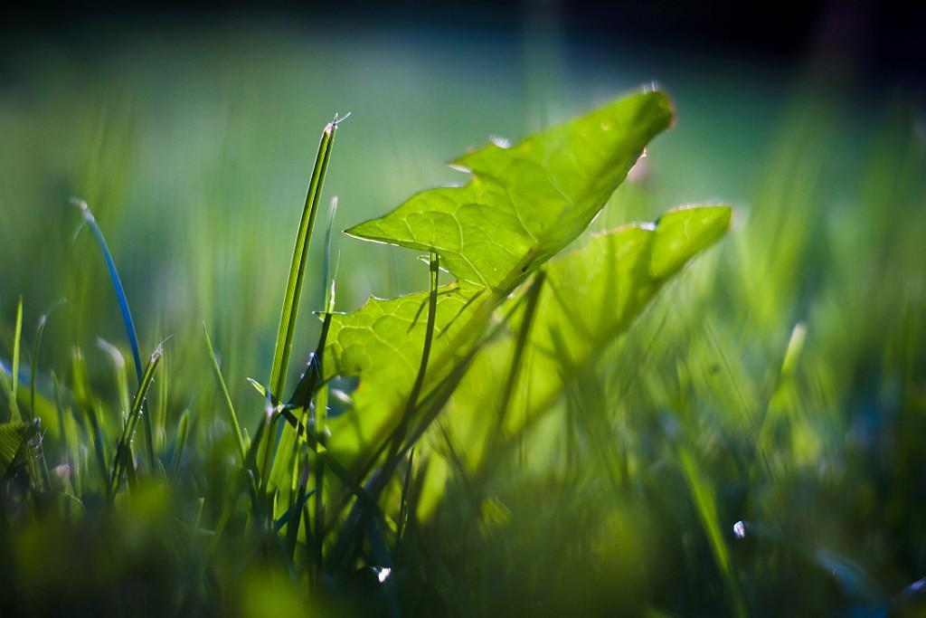 IMAGE: http://www.4photos.de/galerie/Natur/slides/Löwenzahn.jpg