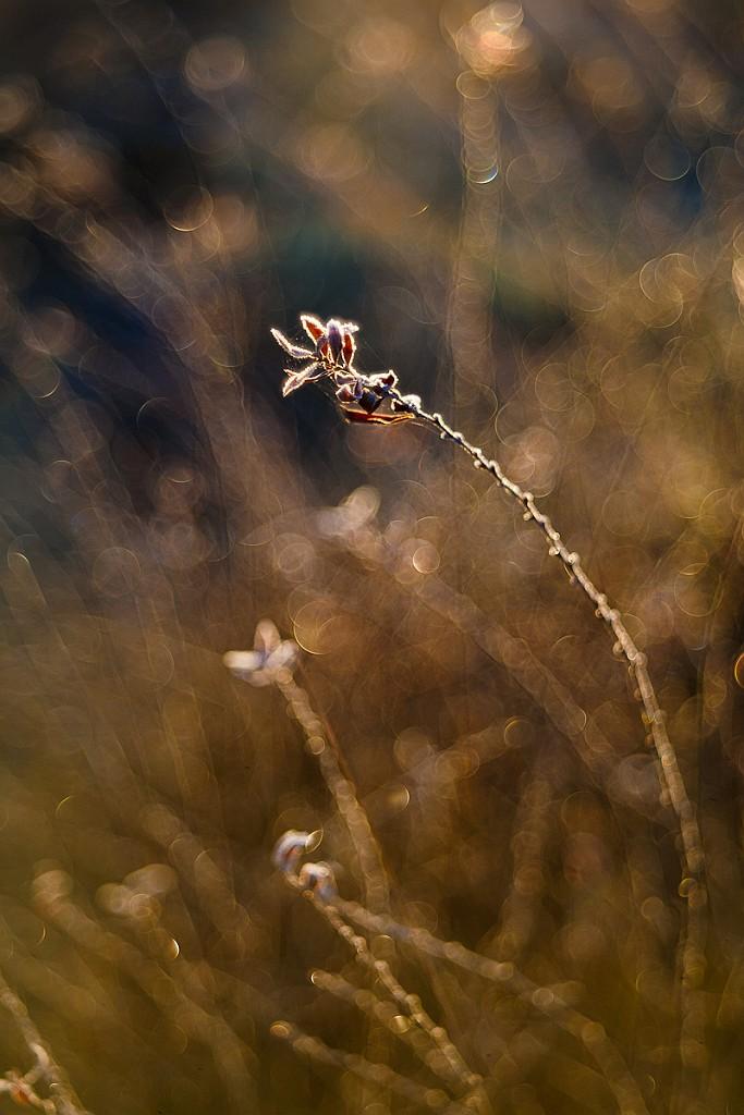 IMAGE: http://www.4photos.de/galerie/Natur/slides/Morning-Bubble-Bokeh.jpg